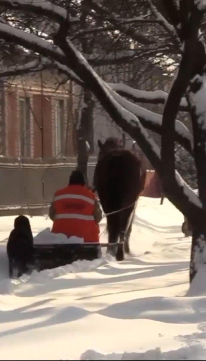 Новини України: у Львівській області комунальник осідлав коня, щоб чистити хідники від снігу