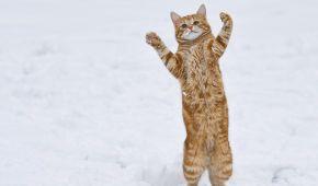Как мир радуется зиме: топ ярких фото
