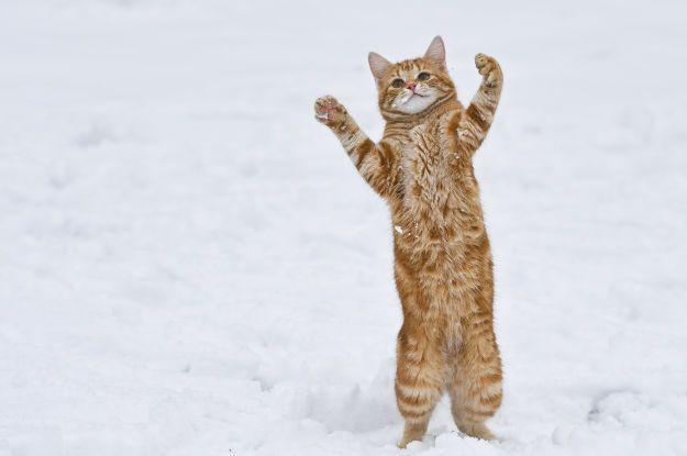 Як світ тішиться зимі: топ яскравих фото