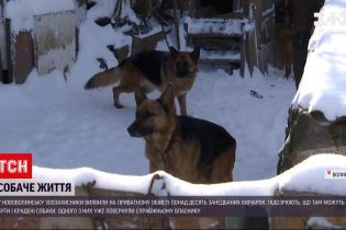 Новости Украины: в Нововолынске обнаружили более десятка овчарок на одном подворье