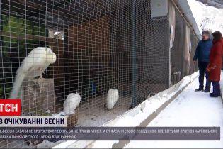 Новини України: львівські бабаки не прокинулися, щоб віщувати весну