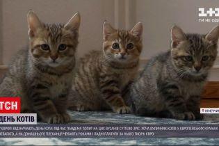 Новости мира: почему в Европе даже беспородных кошек из приюта не отдают бесплатно