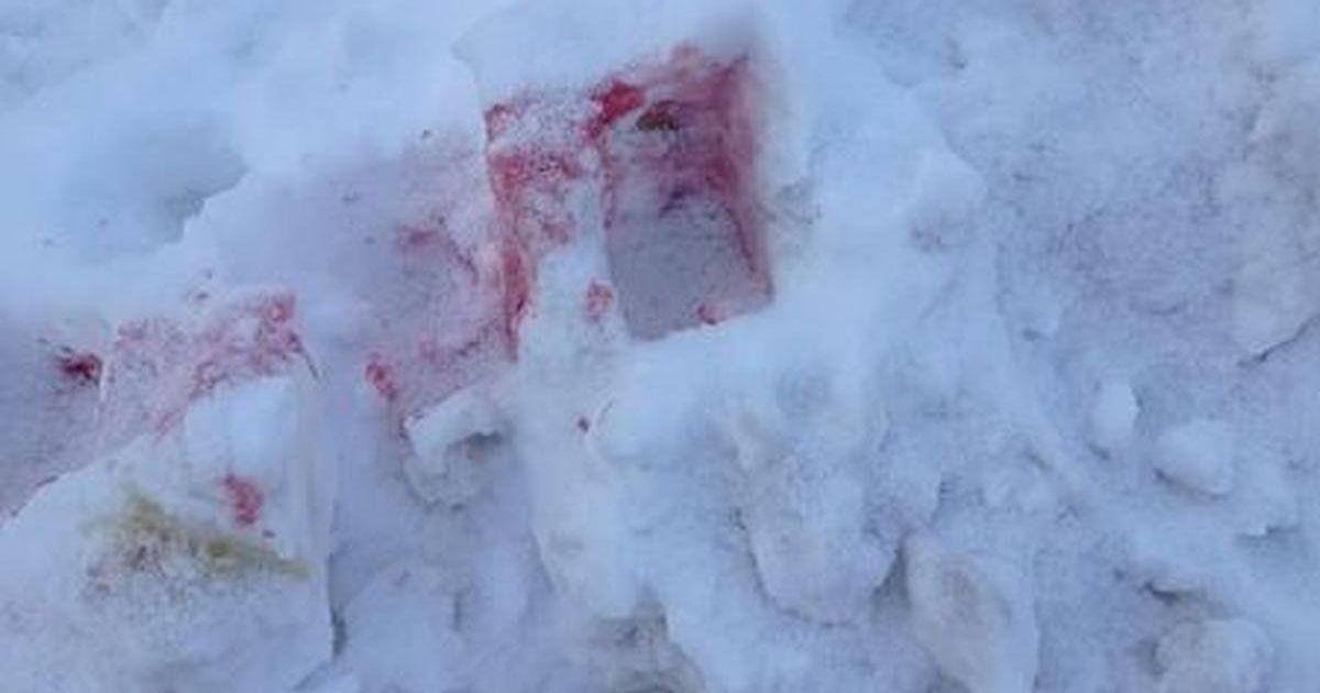 Розовый снег: в Киеве активизировались догхантеры, которые массово рассыпают отраву для собак