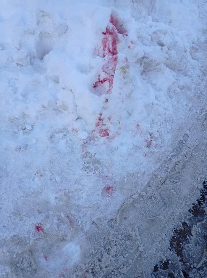 Сніг у місці, де злочинці розсипали отруту