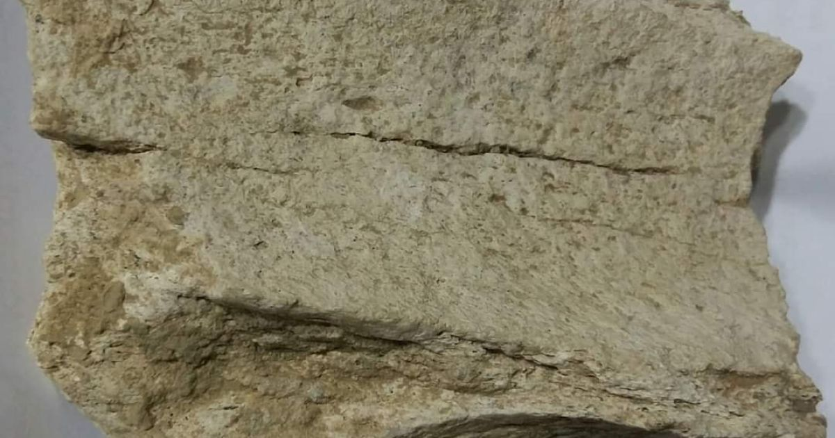 На півдні Одеської області виявили рештки загадкової стародавньої істоти