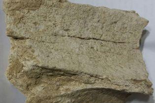 На юге Одесской области обнаружили останки загадочного древнего существа