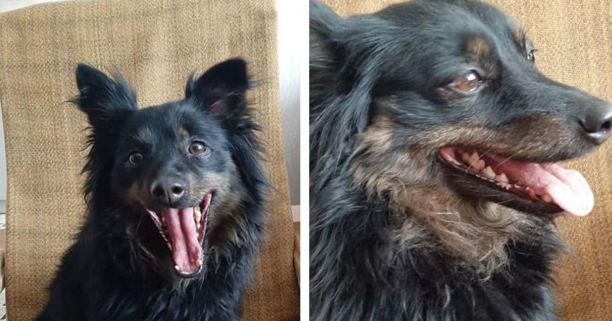 Після смерті АТОвця родичі вигнали собаку: волонтери шукають для Марусі новий дім