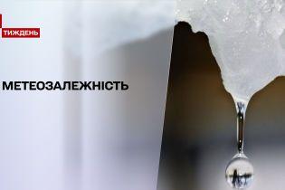 Погода в Украине: на смену снегам и морозам пришло потепление