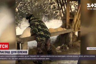 Новости Украины: егери Ровенской области подкармливают оленей, чтобы те могли пережить зиму