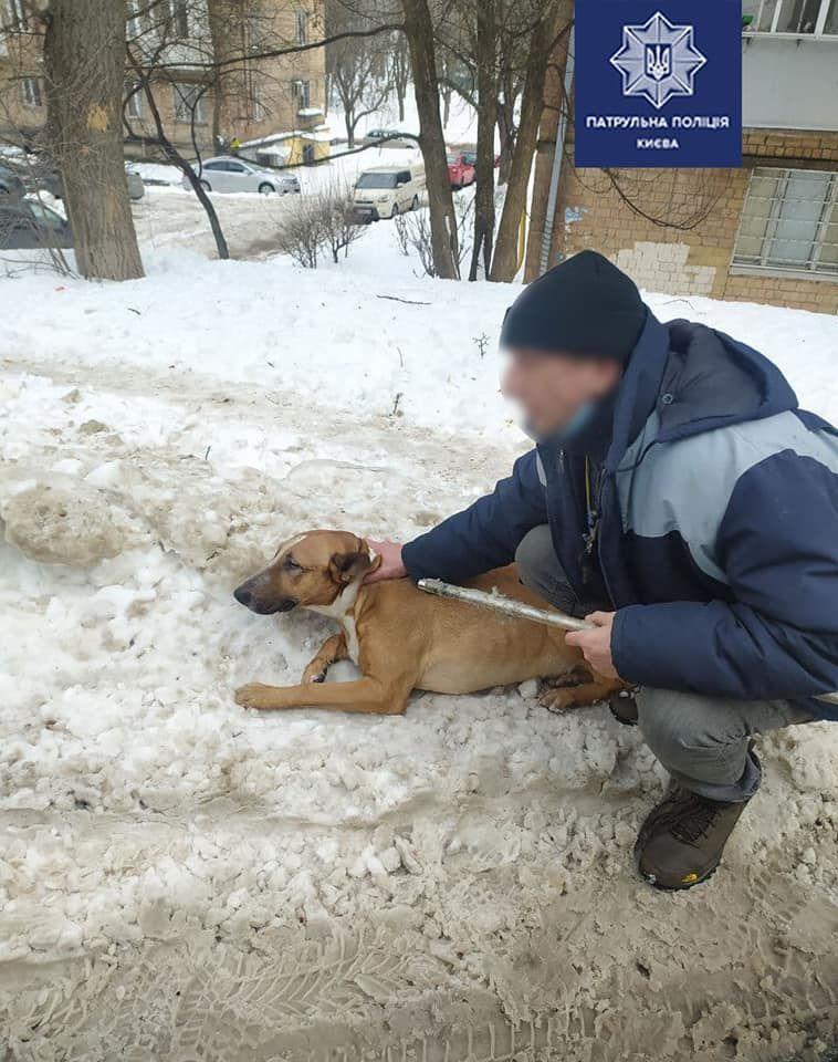 На вулиці Уманська знайшли пораненого собаку