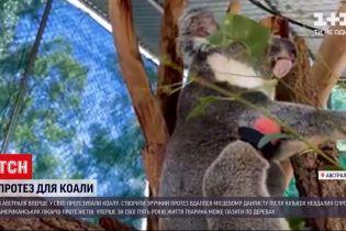 Новини світу: в Австралії зробили перший у світі протез для коали