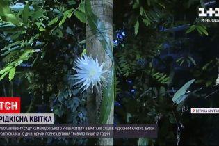 Новости мира: в ботсаду Кембриджского университета зацвел редкий кактус