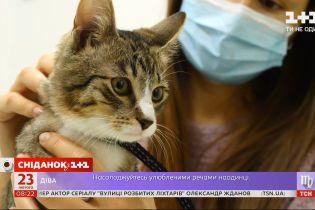 Почему домашних животных лучше стерилизовать и как подготовиться к процедуре