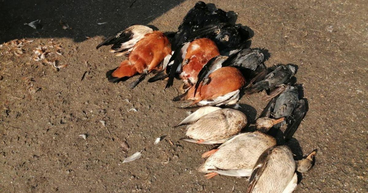 В Херсонской области в заповеднике зафиксировали массовую гибель птиц: нашли 150 тушек
