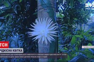 Новини світу: з британського ботанічного саду транслювали цвітіння рідкісного кактуса
