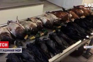 """Новини України: у заповіднику """"Асканія-Нова"""" знову загинули майже дві сотні птахів"""
