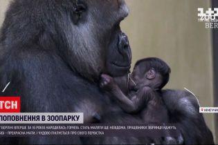Новини світу: у берлінському зоопарку вперше за 16 років народилась горила