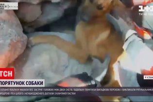 Новини світу: у Іспанії рятували пса, голова якого застрягла між двох скель
