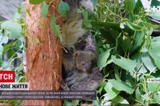 Новости мира: в зоопарке Сиднея впервые за год родился малыш коалы