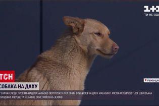 Новости Украины: в Ровенской области пес в очередной раз оказывается на крыше магазина