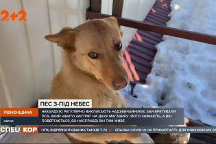 Собака, которая живет на крыше: в Ровенской области пес постоянно возвращается на кровлю магазина