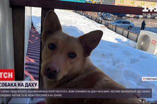 Новости Украины: в Ровенской области пес живет на крыше магазина