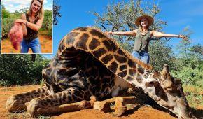 Охотница похвасталась сердцем только что застреленного жирафа и возмутила Сеть