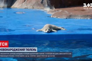 Новини світу: в океанаріумі Шанхаю народилося перше цьогорічне тюленя