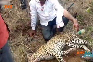 В Индии леопард напал на людей, которые ехали на мотоцикле
