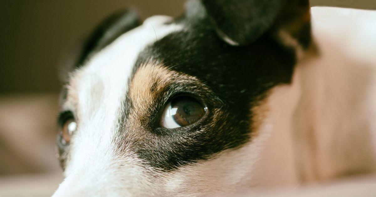 У Києві нова хвиля отруєнь собак доґхантерами