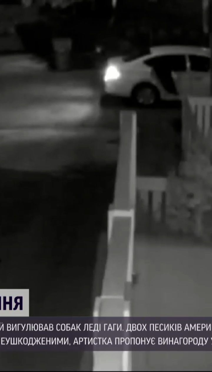 Новини світу: оприлюднили відео, на якому видно як викрали собак Леді Гаги