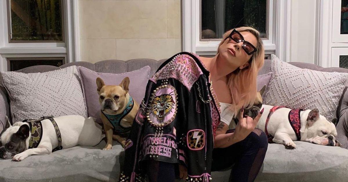 Леді Газі повернули викрадених собак