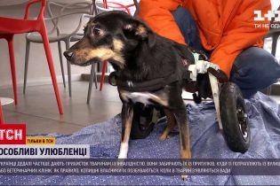 Новости Украины: на что обращать внимание перед тем, как приютить животное с инвалидностью