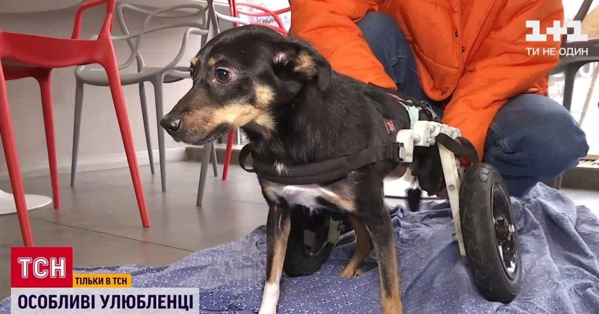 В Украине становится популярным давать приют животным с инвалидностью: что следует знать