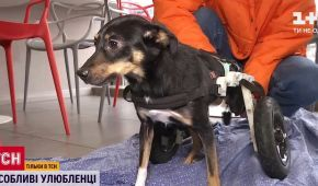 В Україні стає популярним давати прихисток тваринам з інвалідністю: що варто знати