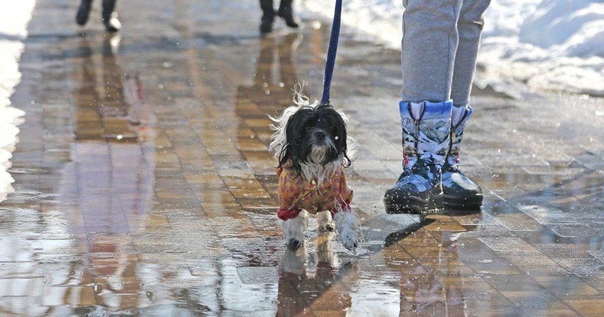 Прогноз погоды на 28 февраля: в Украине будет холодно, мокрый снег с дождем