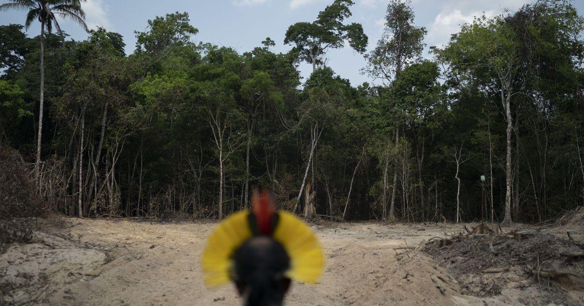 У Facebook виставили на продаж ліси Амазонії