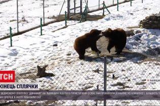 """Новости Украины: во львовском медвежьем приюте """"Домажир"""" проснулись косолапые"""