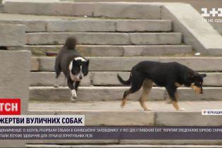 Новости Украины: в Каневском заповеднике стая бездомных собак разорвала косуль
