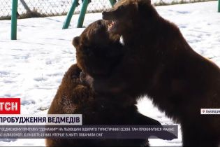 Новини України: ведмеді з львівського притулку прокинулися після зимової сплячки