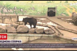 Новости Украины: в винницком зоопарке незадолго до начала весны уснула медведица
