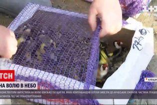 Новости Украины: украинец хотел контрабандой доставить 150 птиц в ОАЭ