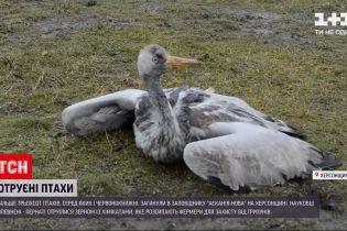 """Новини України: що загрожує заповіднику """"Асканія-Нова"""" через загибель понад 300 птахів різних видів"""