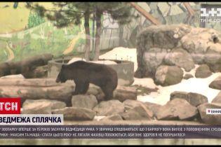 Новини України: у Вінницькому зоопарку вперше за 15 років упала в сплячку ведмедиця