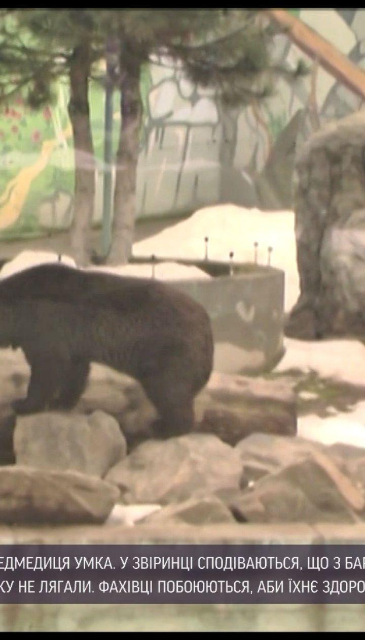 Новости Украины: в Винницком зоопарке впервые за 15 лет впала в спячку медведица