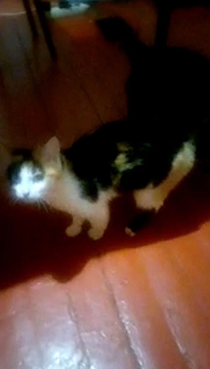 Порятунок кішки у Кривому Розі: рятувальники збили тварину з дерева струменем води
