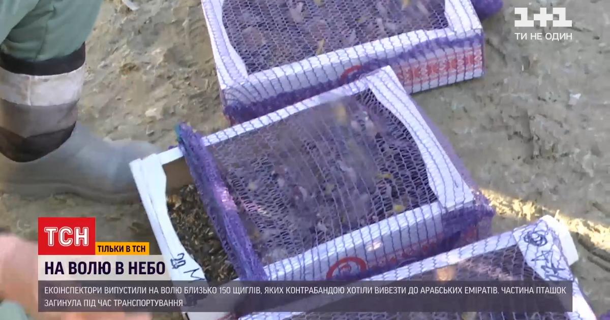 Почему в арабских странах готовы выкладывать круглые суммы за украинских щеглов