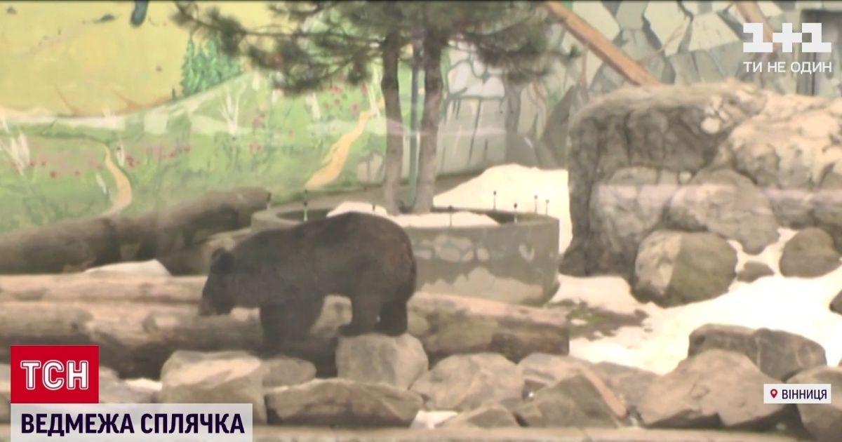 Зарылась в землю на полтора метра: в зоопарке в Виннице медведица впала в спячку впервые за 15 лет