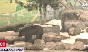 Зарилась в землю на півтора метра: у зоопарку в Вінниці ведмедиця впала в сплячку вперше за 15 років