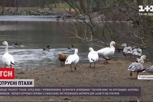 """Новини України: у Херсонській області розслідують отруєння птахів у """"Асканії-Новій"""""""